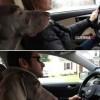 A nő vagy a férfi vezet jobban? A kutya döntött.