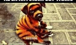 Az én anyukám egy tigris