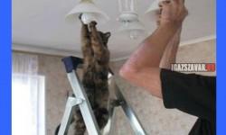 Jól jön a segítség a háznál