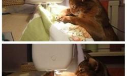 A macska varrja meg!