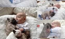 Aranyos alvópajtik