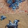 Blue Dragon, kék sárkány a világ legszebb és legritkább puhatestűje!