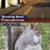 Egy dilis, szőrös és jól lakott mókus