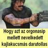 Rambo – kutyaúristenit!