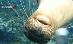 A galapagosi oroszlánfóka szívesen pózolt a kamerának