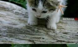Az aranyos kis barátom