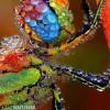Egy gyönyörű harmatos szitakötő