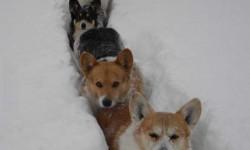 Hóvonat érkezik a vágány mellett kérjük vigyázzanak!