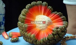 Láttál már ilyen HALA gyümölcsöt?