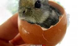 Mégis igaz a húsvéti történet, pedig hány évig félrevezettek!