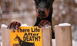 Vajon van élet a halál után? Derítsd ki!