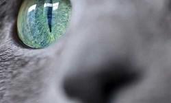 A legszebb macska szeme