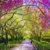 Tavasz a Central Parkban