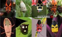 Arcoskodó bogarak