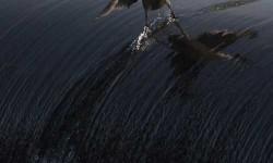 Csak egy laza szörföző kacsa