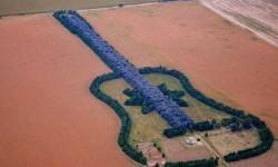 Felesége emlékére ültette a gitár alakú erdőt