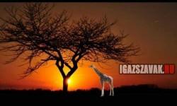 Hogyan lehetünk egy pillanat alatt Afrikában