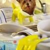 Így segít a kutyusom mosogatni