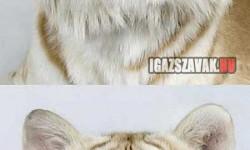Tablókép a végzős tigrisekről a tigrisképzőben