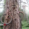 60 évvel ezelőtt odaláncoltam a biciklimet ehhez a fához