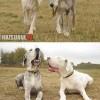 Megható történet Lilyről, a világtalan kutyusról