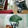 A cicám szeret takarítani
