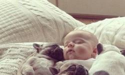 A kisbaba és a legjobb barátai