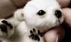 Baby jegesmedve