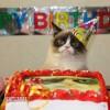 Boldog születésnapot Grumpy Cat