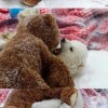 Jegesmaci és az ő legjobb barátja