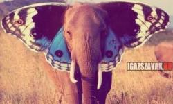 Ki mondta, hogy az elefánt nem tud repülni?