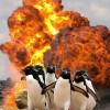 Soha ne szórakozz a pingvinekkel!