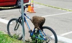 1 millióért ráülnél erre a biciklire?