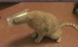 A 11 legbénább cica
