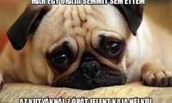A kutyák 7 nagy problémája
