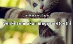A macskák 10 legnagyobb problémája