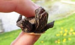 Egy igazán boldog teknős