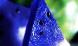 Kék görögdinnye, a nyár szenzációja- Falnád?