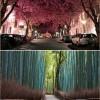 A világ legszebb fái