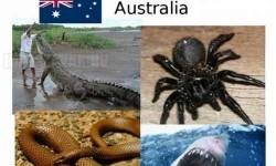 A legveszélyesebb állatok