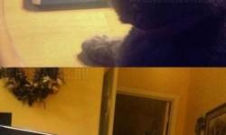 A macskám tuti nem elégedett velem