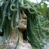 Medúza kaktusz