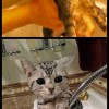 A macskákat nagyon megviseli a fürdetés