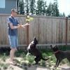 Ez történik ha adsz 3 kutyának 60 teniszlabdát