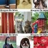 Hogyan látják az állatok VS hogyan látom én