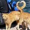 Macska szerelem