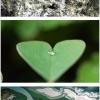 A természet szeret téged