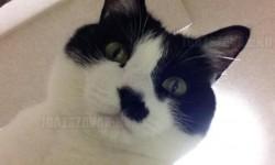Végre megérkezett: Önfotózó alkalmazás a mobilodra macskáknak