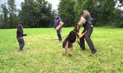 Megvédi az 5 éves kislányt a kutya