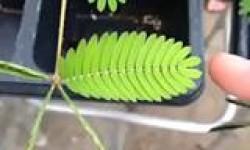 Ilyen növényt még nem láttál! Figyeld!